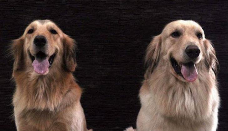 Astaga, Wanita Tua Tertangkap Kamera Berhubungan Badan dengan 2 Ekor Anjing
