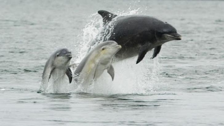 Lumba-lumba Mati Terperangkap Jaring Nelayan Rohil, Peristiwa ini Sering Terjadi Bahkan Dijual