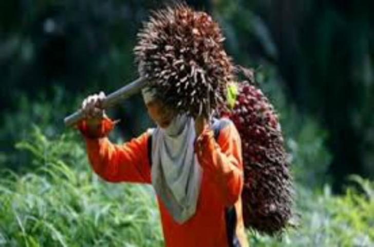 Petani Riau Boleh Gembira, TBS Sawit Naik Rp41,46