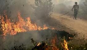 Kisah Menteri LHK tekan kebakaran hutan dari 2 juta turun 190 ribu titik panas