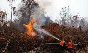 KLHK Sebut Kebakaran Hutan dan Lahan Berhasil Ditekan