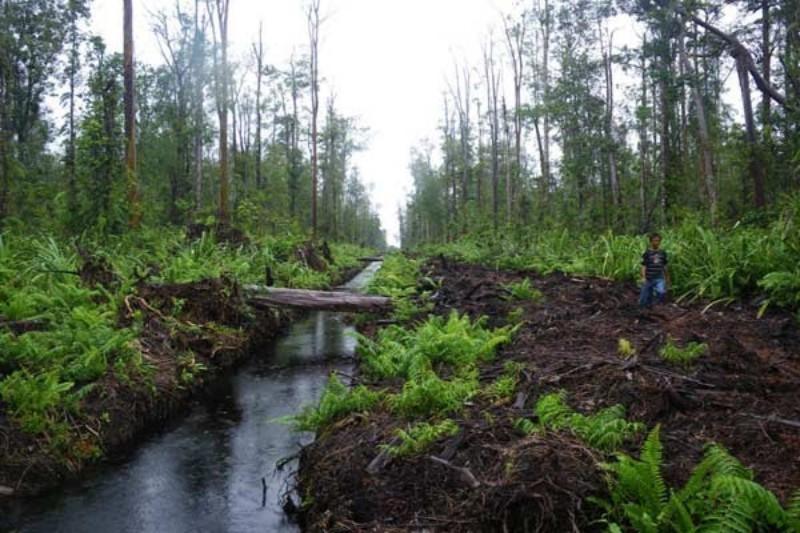 Ekosistem Gambut Riau Bakal Diperbaiki, Ini yang Dilakukan Syamsuar