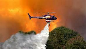 KLHK Menangkan Gugatan Terhadap Kasus Kebakaran Hutan Riau